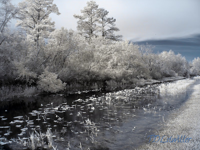 Okefenokee Swamp State Park, GA Infrared   taken with an R72 filter