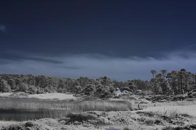 Infrared Monterey 04-17-10