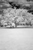 TreeIR07071210DCRW_1910-1