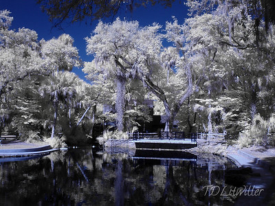Juniper Springs Recreation area, Ocala National Forest, Ocala Florida