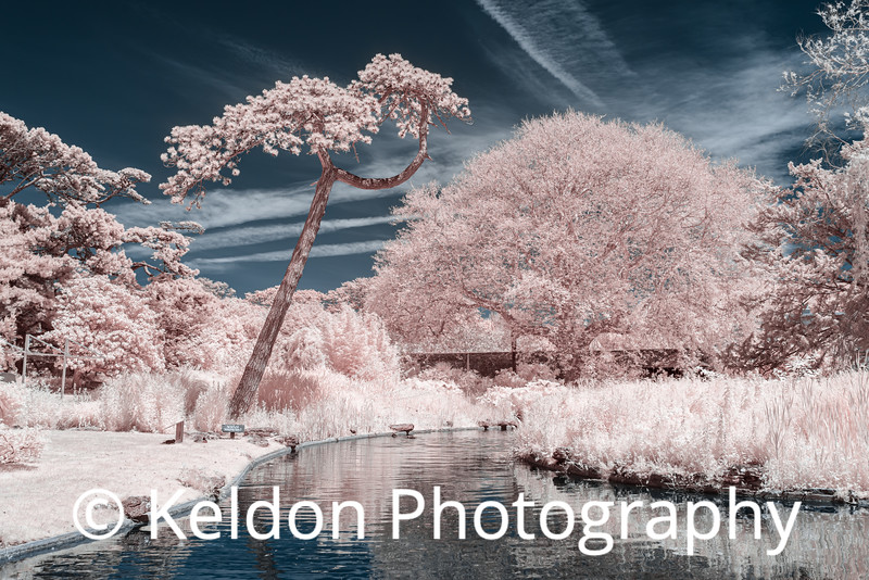 Trees at Samares Manor, Jersey (infrared)
