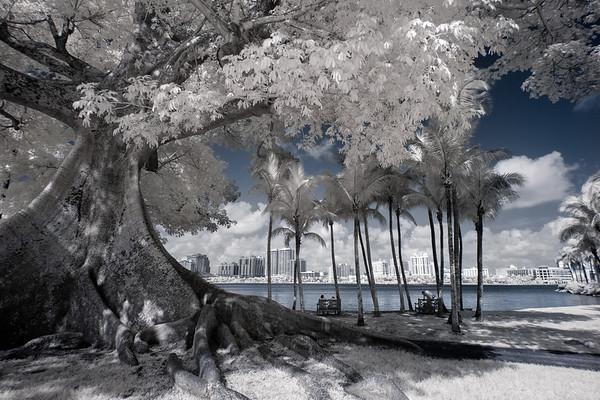 View from Palm Beach of West Palm Beach skyline