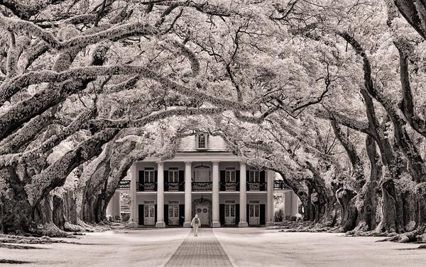 Oak Alley Plantation, Vacherie, Louisiana