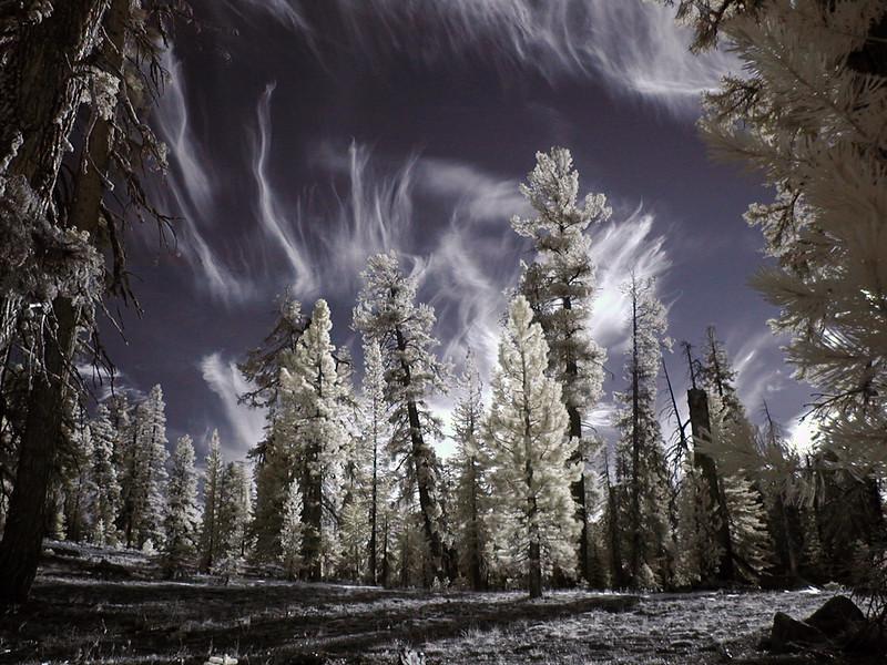 Tree Wraiths