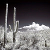 Saguarro National Park, Tucson, Arizona