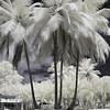 Palm Bouquet, Isla Verde, Puerto Rico