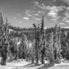 Paradise Area, Mt. Rainier National Park, Washington