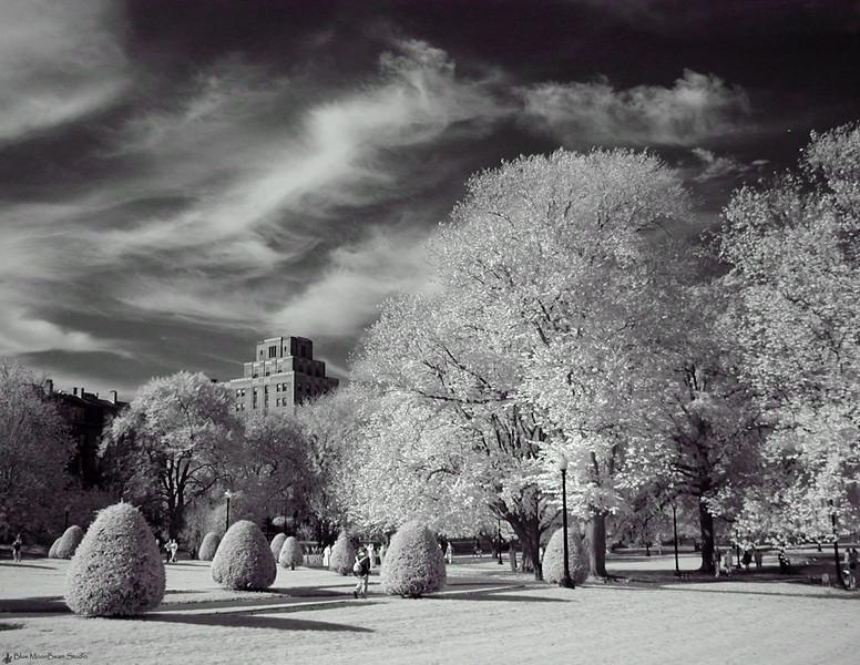 Boston Commons (Infrared)