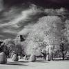 Boston Commons (Infrared)