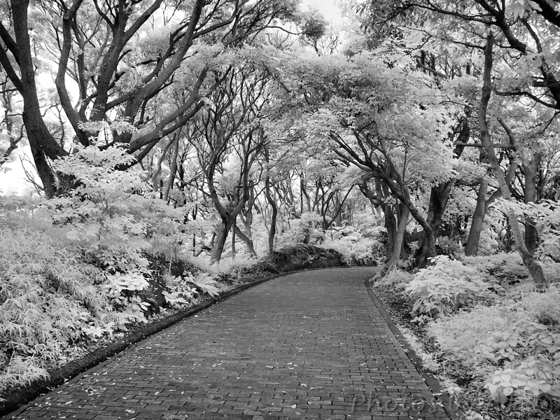Kannonzaki Park<br /> Infrared Photo of Japan