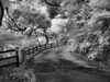 Kannonzaki Park <br /> Infrared Photo of Japan