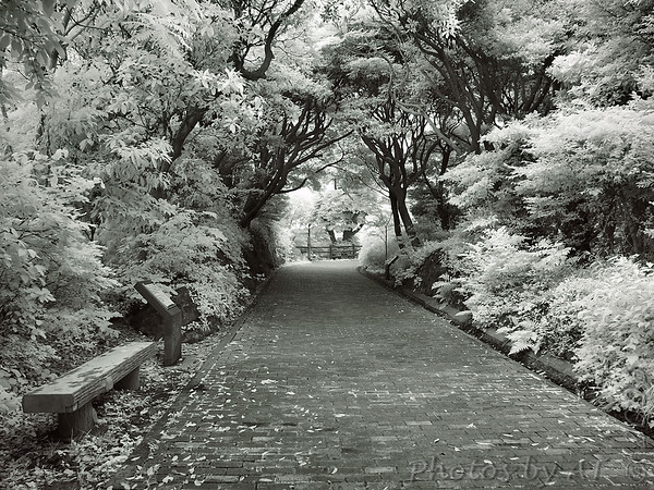 Kannonzaki Park  Infrared Photo of Japan