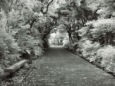 Kannonzaki Park  Infrared Photo of Japan