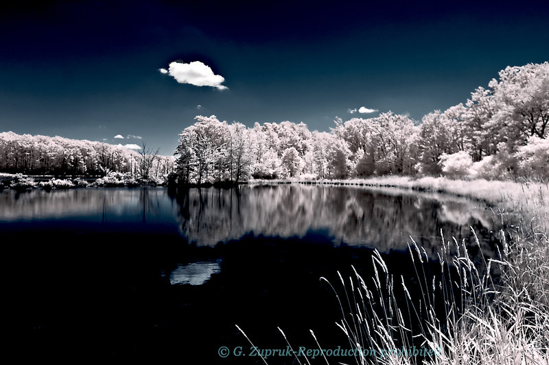 Teeter Pond, Finger Lakes National Forest on a hot July afternoon.<br /> Partial color infrared image.
