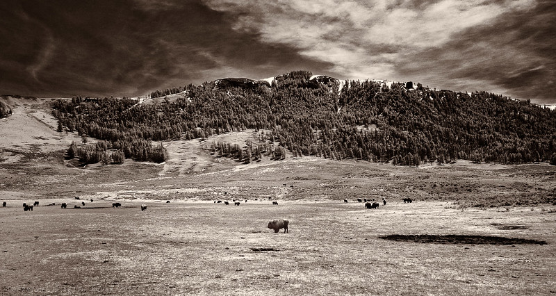 Infrared - Sepia Conversion - Lamar Valley