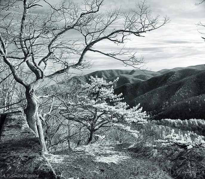 Virginia skyline drive<br /> - Infrared Photo -