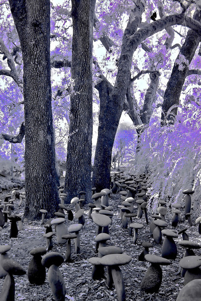 """<h4 style=""""color:#CC9999;font-size:150%"""" >Toadstool Garden<font style=""""color:red"""" >   </font><font style=""""color:#A8A8A8"""" >Domaine Chandon Winery, Yountville, CA</font>"""
