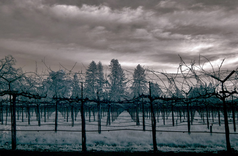 """<h4 style=""""color:#CC9999;font-size:150%"""" >Stormy Vineyard<font style=""""color:red"""" > 