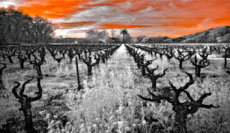 "<h4 style=""color:#CC9999;font-size:150%"" >Vineyard Sentinels<font style=""color:red"" > 