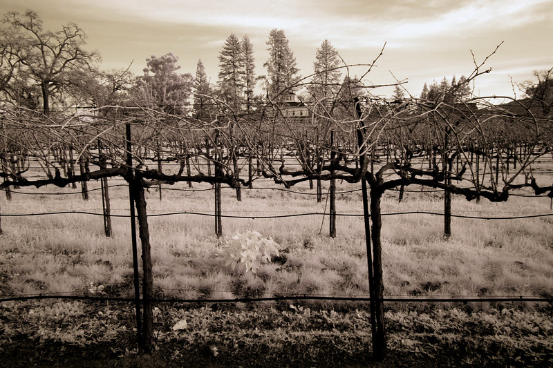 "<h4 style=""color:#CC9999;font-size:150%"" >Winter Vines II<font style=""color:red"" > 