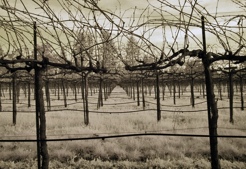 "<h4 style=""color:#CC9999;font-size:150%"" >Winter Vines I<font style=""color:red"" > 