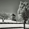 Sotterley Plantation - Necessary (18th century)<br /> - Infrared Photo -