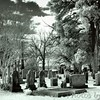 Triniry Church Cemetery <br /> St. Mary's City, Maryland<br /> - Infrared Photo -