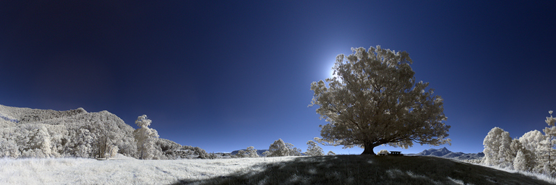 09 Lone Fig Panorama