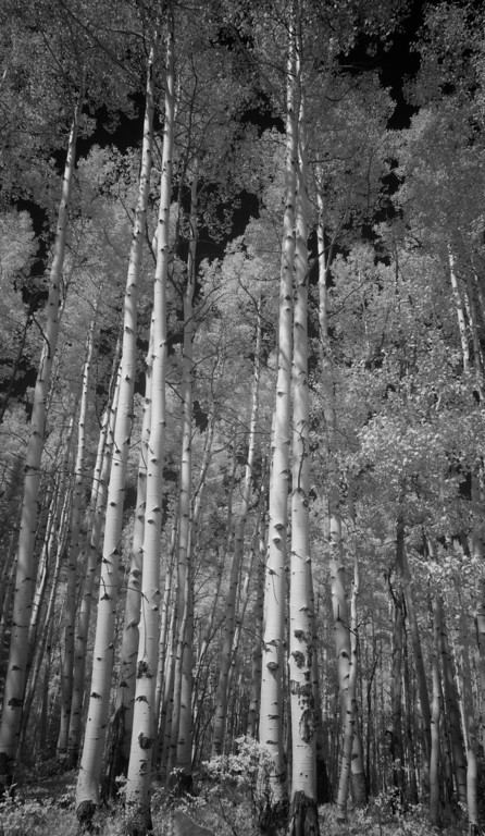 Infra Red aspens on Kebbler 14