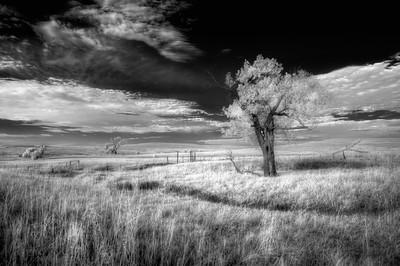 Tree at Tallgrass