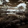 Across the Lake at Morikami