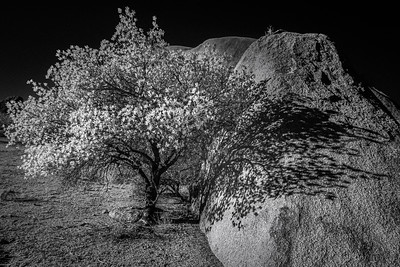 Tree and rock near Spitzkoppe, Namibia