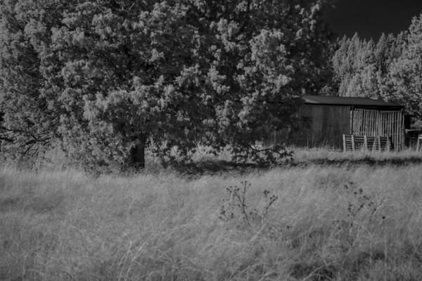 bashful barn ...