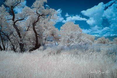 Infrared_002