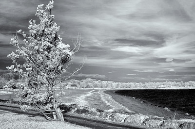 Sherwood Island State Park Infrared