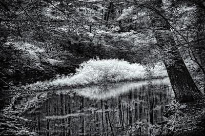 Mianus River _010