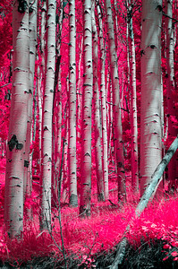 I Dream Of A Forest Electric (Pink)