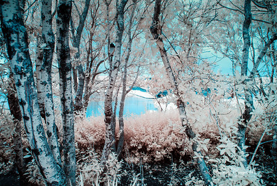 Infrared_017