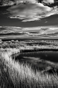 Marshes at Silver Sands
