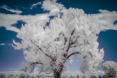 Infrared_003