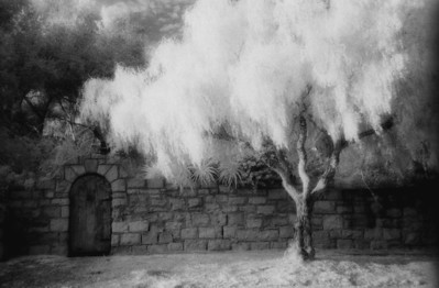 Kodak HIE black and white infrared film scanned to digital.