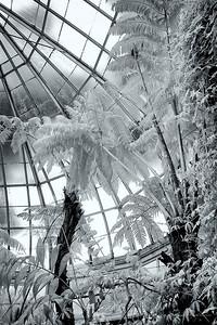 NYBG Conservatory