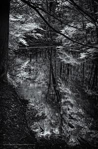 Mianus River Reflections