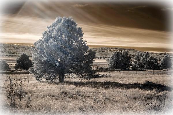 winter range ...