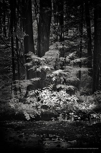 Pequonnock River Valley Park, Trumbull, CT Infrared