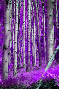 I Dream Of A Forest Electric (Purple)