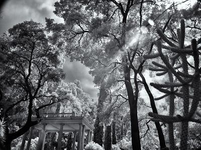 Arboretum, Montalvo Arts Center, Saratoga, California, 2010