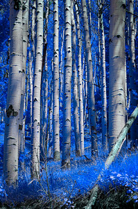 I Dream Of A Forest Electric (Blue)