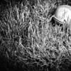 Baseball Anyone?