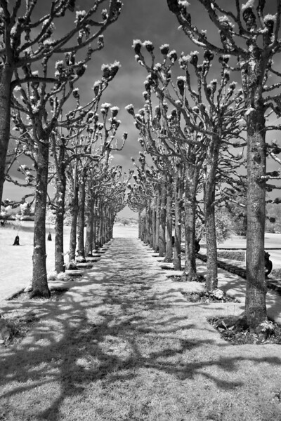 Motissfont Avenue of Trees
